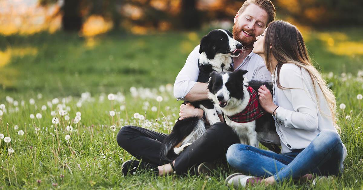 responsabilita civile animali domestici tutela legale tutela medica - assix